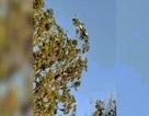 Lạ lùng cảnh rắn bò trườn trên ngọn cây cao tít, ngỏng cổ nhìn trời
