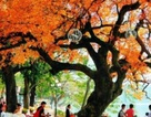 Những chuyến du lịch mùa thu sao có thể bỏ lỡ những điểm đến lãng mạn này