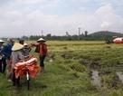 Xác minh thông tin côn đồ bảo kê máy gặt lúa, ép giá nông dân