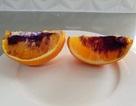 Giới khoa học điên đầu vì quả cam chuyển sang màu tím chỉ sau một đêm