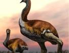 Ai đã giết loài chim lớn nhất từng tồn tại?