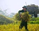 Trữ lương thực, hàng thiết yếu tại khu vực có nguy cơ bị chia cắt