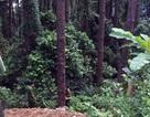 Đôi nam nữ thương vong khi xe máy lao xuống vực sâu ở Tam Đảo