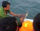 Giải cứu 12 cá thể vích quý hiếm ở Phú Quốc