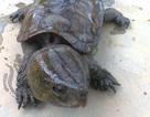 Lĩnh án 10 năm tù vì vận chuyển trái phép động vật hoang dã