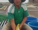Nuôi loài cá nghìn đô trên sông Hồng, mỗi năm bỏ túi cả tỷ đồng.