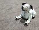 """Chú chó robot AIBO """"hồi sinh"""" hút khách xem tại triển lãm IFA 2018"""