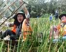 Mùa nước nổi đến Tràm Chim giăng câu, thả lưới