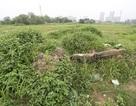 Ôm đất dự án rồi bỏ hoang 14 năm: Licogi lại muốn huy động 4.000 tỷ đồng