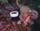 """Xem cảnh bạch tuộc """"nẫng tay trên"""" máy quay của thợ lặn"""