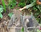 Quảng Bình: Thả 11 cá thể động vật hoang dã về môi trường tự nhiên