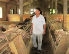 Buộc thôi việc cán bộ xã có nhiều sai phạm nhận tiền của người chăn nuôi tại Quảng Trị