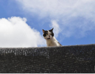 Mèo có giỏi bắt chuột như bạn nghĩ?