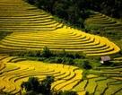 Thu về chiêm ngưỡng những ruộng bậc thang đẹp nhất Việt Nam