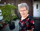 Cụ bà 93 tuổi tay không đối đầu 2 tên cướp túi