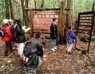 Khu rừng tự sát rợn tóc gáy ở Nhật Bản
