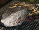 """Những đặc sản siêu """"độc"""" từ 4 loài cá xấu xí"""