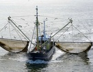EU bỏ phiếu cấm đánh bắt cá bằng xung điện gây tranh cãi