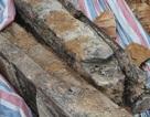Thi công đường, phát hiện di chỉ mộ táng có niên đại thời Trần