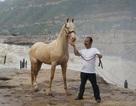 """Đại gia Trung Quốc chi 300 triệu USD mua giống ngựa """"mồ hôi đỏ như máu"""""""