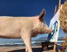 Chi hàng nghìn bảng Anh mua tranh của lợn