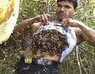 Người đàn ông phơi mình cho hàng ngàn con ong đốt mà không biết đau