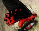 Kinh dị phong cách trang điểm đính xác côn trùng lên mặt