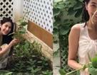 Thủy Tiên khoe vườn rau xanh mướt, phải mang bán bớt vì quá được mùa