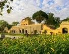 Thỏa thích chụp ảnh cánh đồng hoa mặt trời giữa Hoàng thành Thăng Long
