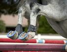 Bạn có chắc là mình biết một chiếc móng ngựa được đóng như thế nào?