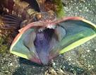 """Cận cảnh loài cá nhỏ bé """"ác mộng"""" dưới đại dương"""
