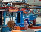 Tàu cá hối hả vươn Trường Sa, sẵn sàng ăn Tết trên biển