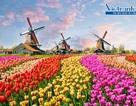 Khám phá lễ hội hoa xuân khắp thế giới