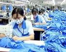 Xuất khẩu thua Trung Quốc, Ấn Độ: Ngành dệt may sẽ ra sao sau khi CPTPP có hiệu lực?
