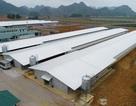 Doanh nghiệp ngoại tiếp sức ngành chăn nuôi Việt Nam vươn ra biển lớn