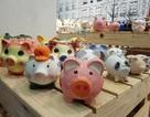 """Ngắm 2.000 chú """"Lợn sung túc"""" của nhà sử học Dương Trung Quốc"""