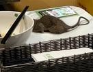 Thực khách hoảng sợ bỏ chạy vì chuột rơi từ trần nhà xuống bàn ăn