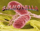 Nhiều sản phẩm dinh dưỡng công thức nhiễm khuẩn Salmonella Poona đã được nhập khẩu về Việt Nam