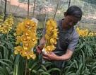 Đà Lạt: Kiếm tiền triệu nhờ ghép lan cảnh ngày Tết