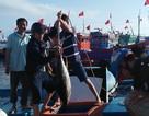Quảng Ngãi: Ngư dân đảo tiền tiêu hối hả vào bờ đón Tết Nguyên đán