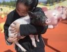 Công viên lợn tấp nập đón khách vui xuân Kỷ Hợi
