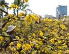 Chợ hoa 30 Tết: Hoa nở rộ mà lòng người bán hoa thì héo