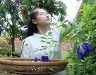 Cô giáo 9X ở làng hoa Sa Đéc khởi nghiệp với trà hoa