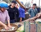 """Thanh Hoá: Ngư dân đón """"lộc biển"""" đầu năm"""