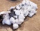 """Chú mèo may mắn bất ngờ """"tái sinh"""" sau khi bị… đông cứng"""