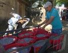 Trúng đậm cá cơm, ngư dân thu hàng chục triệu đồng mỗi chuyến biển
