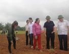 Quảng Trị: Tập trung sản xuất nông nghiệp theo hướng tự nhiên