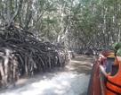 Đến Cần Giờ khám phá rừng Sác cực hoang dã