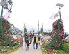 Đà Lạt đón khoảng 300 ngàn lượt khách dịp Tết Nguyên đán Kỷ Hợi
