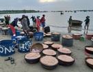 Ngư dân Đà Nẵng trúng đậm mùa ruốc biển đầu năm
